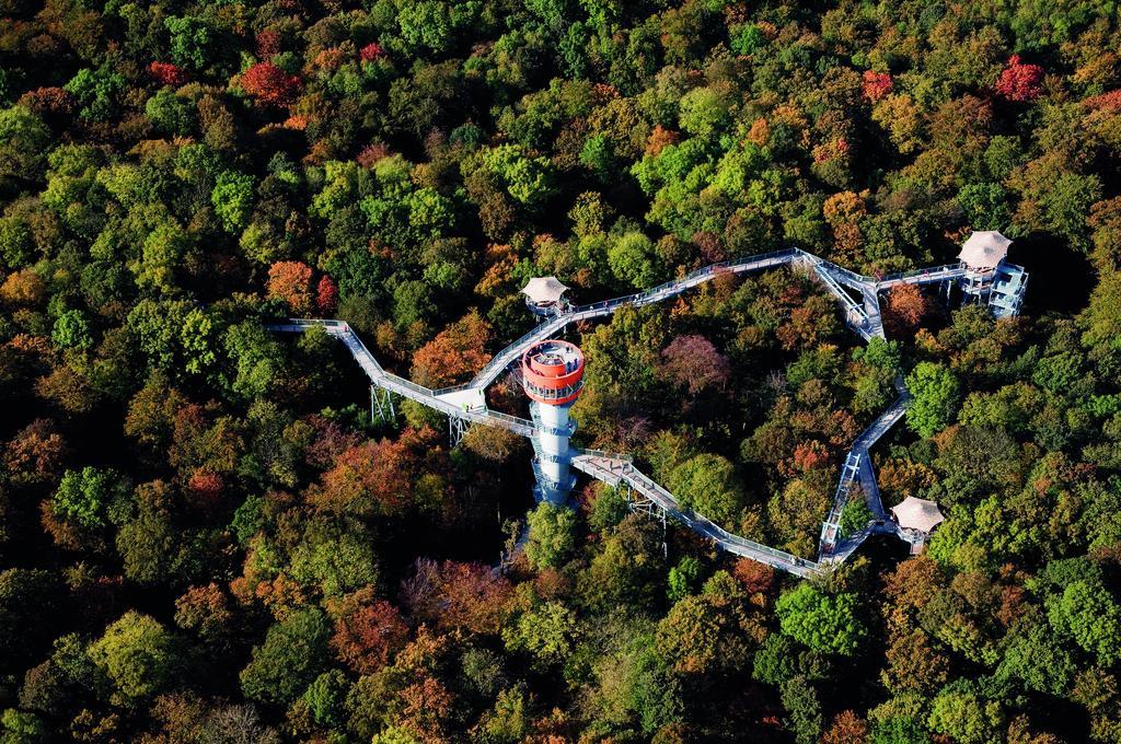 Luftbild vom Baumkronenpfad
