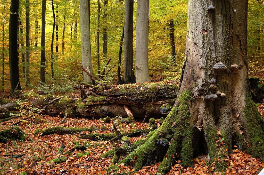 Herbststimmung im Nationalpark Hainich