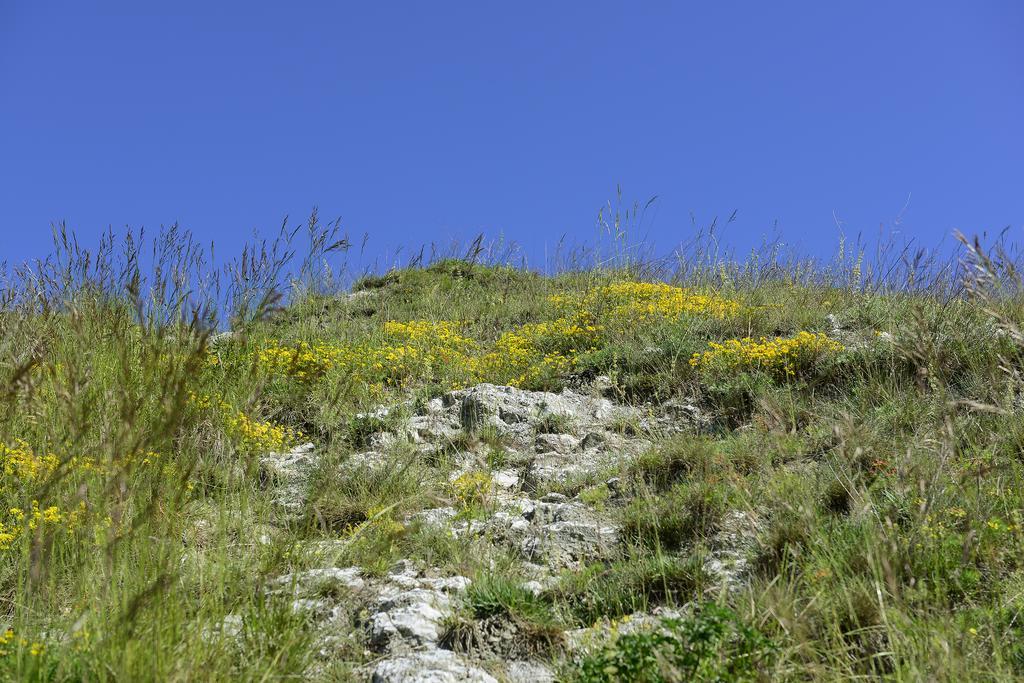 Gipsgestein und Trockenrasen (Foto: L. Koch)