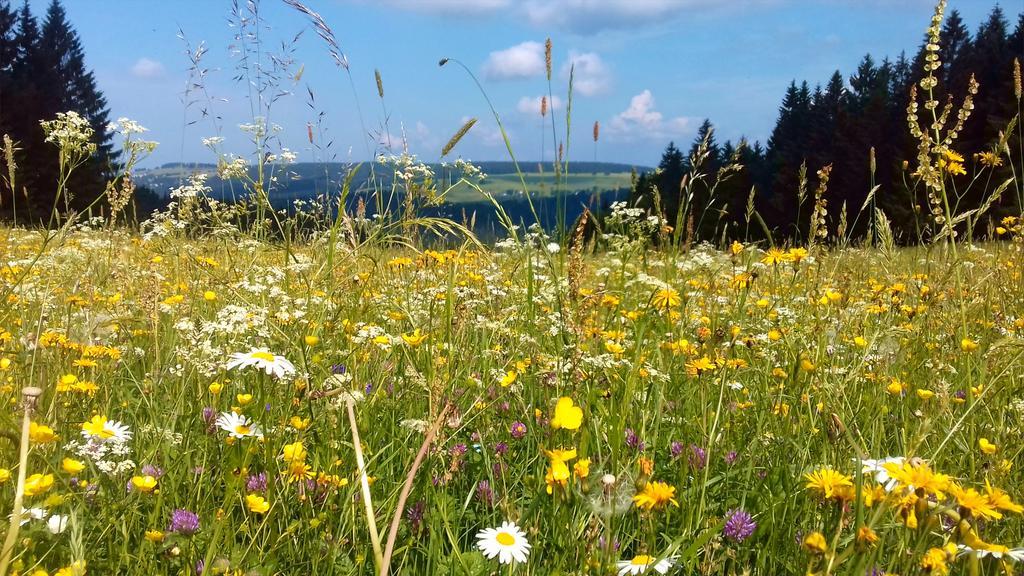 Blühende Bergwiese