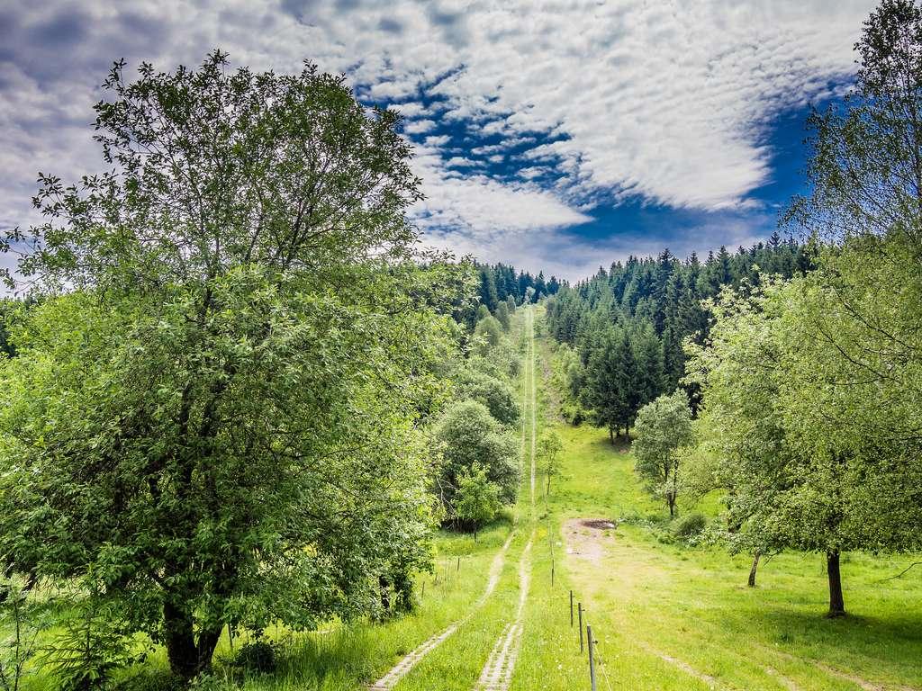 Der frühere Kolonnenweg bei Grumbach - Brennersgrün