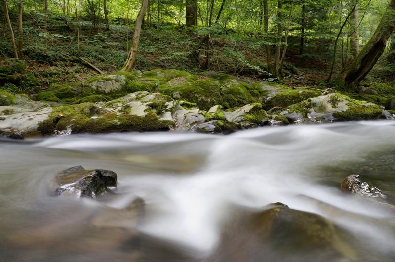 Ein Bach im Wald.